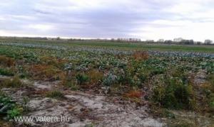 általános mezőgazdasági ingatlan Alsónémedi