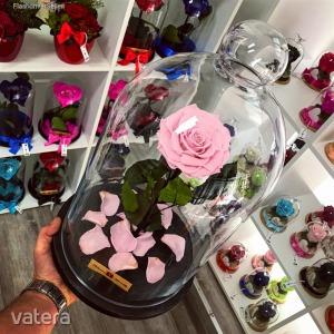 Nagy méretű 45 cm búrába zárt KING Örök Rózsa / Forever Rose - Rózsaszín