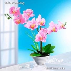 Gyönyörű cserepes selyemvirág orchidea