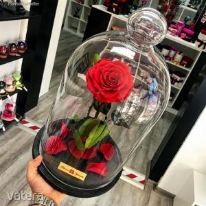 Nagy méretű 45 cm búrába zárt KING Örök Rózsa / Forever Rose - Vörös