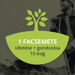Myforest - közösségi erdő 1db fa ültetése és gondozása - Vatera.hu Kép
