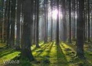 Erdő Gige
